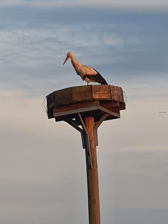 Storch in Erksdorf 2020