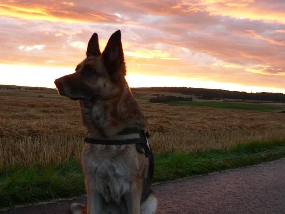 Kira in Sonnenuntergang