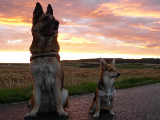 Kira und Maya genissen den Sonnenuntergang