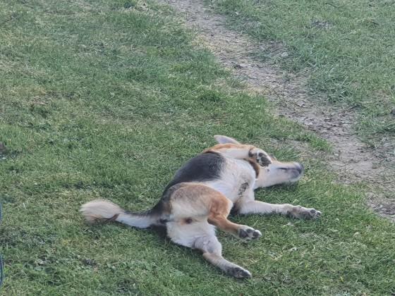 Maya müde