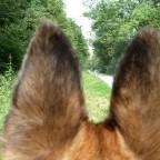 Blick durch die Ohren