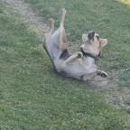 verrückter Hund die zweite