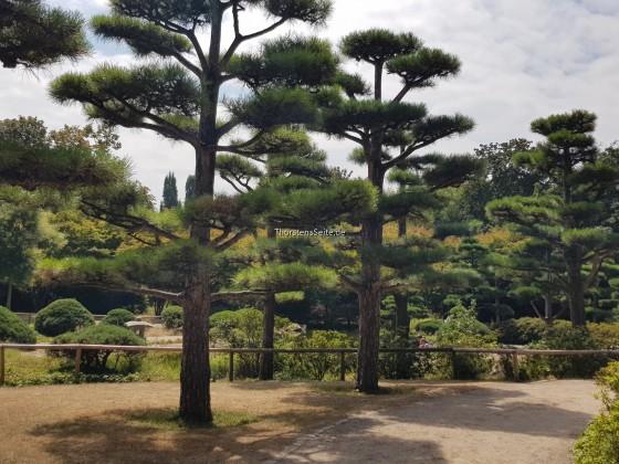 Japanischer Garten Nordpark Düsseldorf