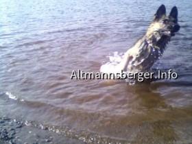 Wasserratte(hund)