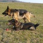 Kira und Rocko